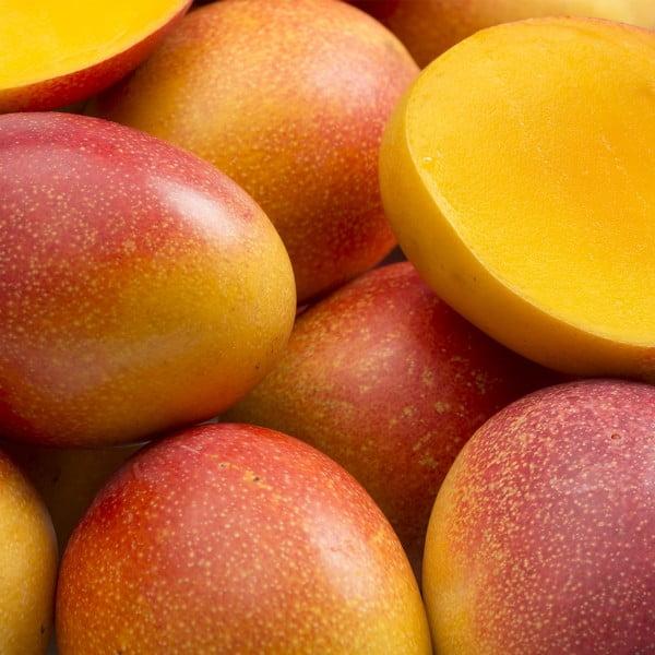 mango ekstraktas