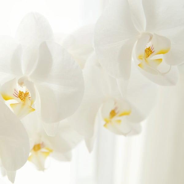 orchideju ekstraktas